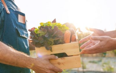 9 bonnes raisons de consommer local